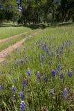 Lupines på landslandskap Royaltyfria Bilder