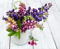 Lupines w wazie Fotografia Royalty Free