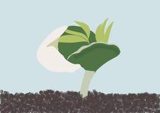 Lupino di germinazione Fotografia Stock Libera da Diritti