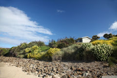 Lupins at Curio bay. Lupins and flax plants form swathes of colour to light up the beach at Curio Bay, South Island, New Zealand Royalty Free Stock Image