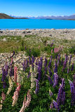 Lupins Lake. Lupins in the spring sunshine backed by stunning turqoise lake and mountains, new zealand Stock Photo