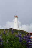 Lupins and lighthouse. Lighthouse picture with violet lupins in front of Stock Images