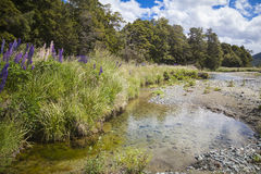 Lupins in a streambed Stock Image