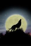 Lupo che urla alla luna Fotografia Stock