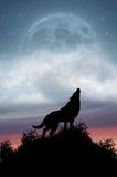 Lupo che urla alla luna piena Fotografia Stock