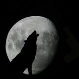 Lupo che urla alla luna piena Fotografia Stock Libera da Diritti