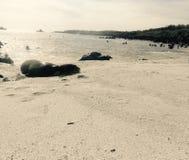 Lupo di mare nella spiaggia Fotografia Stock Libera da Diritti