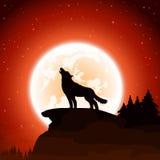 Lupo e luna sul fondo del cielo Fotografia Stock