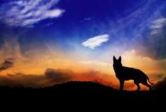 Lupo e tramonto Fotografia Stock Libera da Diritti