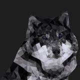 Lupo grigio poligonale Immagini Stock
