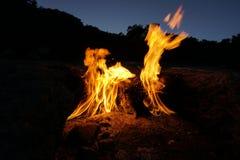 Lupo nelle fiamme - nessun Photoshop fotografia stock libera da diritti
