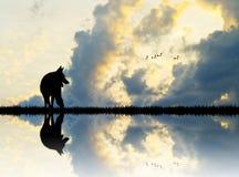 Lupo sul fiume al tramonto illustrazione di stock
