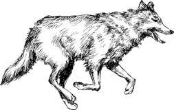 Lupo sveglio disegnato a mano Fotografia Stock Libera da Diritti