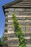 Luppoli crescenti Fotografia Stock Libera da Diritti