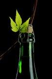 Luppoli e birra Fotografie Stock Libere da Diritti