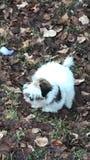 Lupulagem do cão nas folhas foto de stock