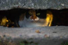 Lura den mångfärgade katten som stirrar världen från säkerhet fotografering för bildbyråer