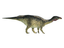 Lurdusaurus Side Profile Stock Photo