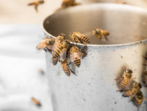 Lure bee with syrup. Royalty Free Stock Photography