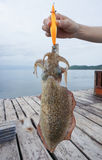 Lure Squid fishing. Hooks sport Royalty Free Stock Photos