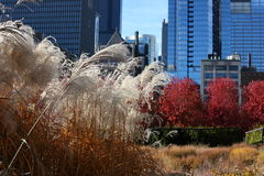Lurie Garden Royalty Free Stock Photos