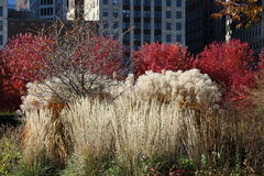 Lurie Garden Royalty Free Stock Photography