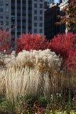 Lurie trädgård Arkivfoton