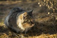 Lurker-Katze Stockfotografie