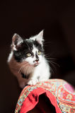 Lurking Black and white cat Royalty Free Stock Photography