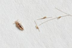 Lus- och gnetkokonger på vitbokbakgrund Fotografering för Bildbyråer