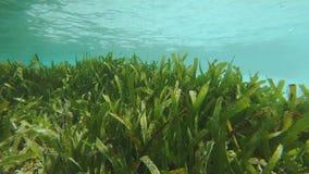 Luscious кровать Seagrass сток-видео