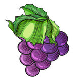 A luscious grape Stock Photo
