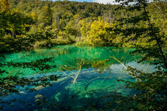 Luscious landscape with a tree under water. A lot of turquoise Stock Images