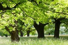 Luscious nature Stock Photos