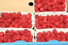 Luscious red raspberries, farmer's market. 5 punnets of bright red raspberries, fresh and tasty Stock Images
