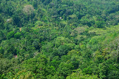luscious regn för bakgrundsskog Royaltyfri Bild