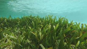 Luscious Seagrass Bed