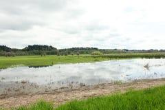 Luscious wetlands Stock Photos