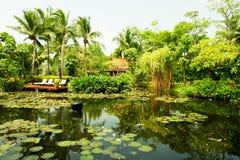 lush засаживает тропическое окруженное прудом Стоковые Изображения RF