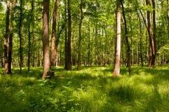 lush зеленого цвета пущи стоковые фотографии rf