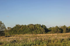 lush зеленого цвета пущи Стоковое Изображение RF