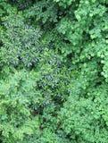 lush листва Стоковые Изображения