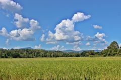 lush лужайки Стоковые Изображения RF