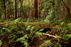 Lush!. Rainforest in Queensland, Australia stock image