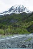 Lush Alaska Wilderness Royalty Free Stock Image