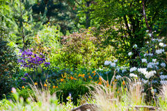 Lush area with colorful wild flowers Royalty Free Stock Photos