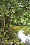 Lush Australia landscape Royalty Free Stock Photos