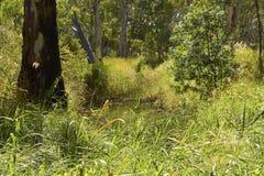 Lush Australian Billabong Royalty Free Stock Image