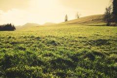 Lush autumn meadow Royalty Free Stock Photo