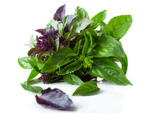 Lush Basil Bunch Royalty Free Stock Images
